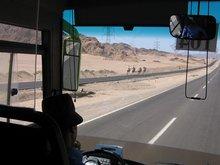 Дорога на Синай