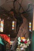 О. Неа Макри. Дерево, на котором казнили св. Ефрема