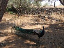 Сад на берегу Галилейского озера где Господь призвал на служение учеников.