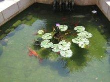 Во дворе храма на месте где Господь накормил 5000 народу 5 хлебами и 2 рыбами.