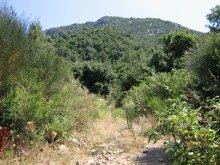 Афонские тропы