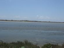 На это озеро прилетают каждый год фламинго.